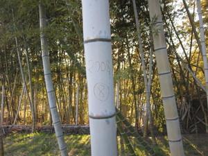 2008年産竹.jpg