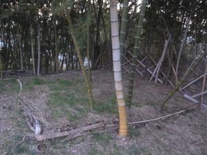 タケノコ栽培スペース2015.12.26.JPG