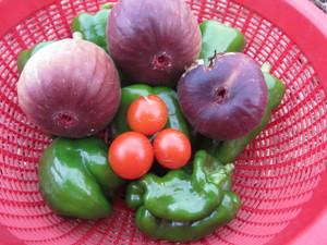 ミニトマト収穫2012.11.3.jpg