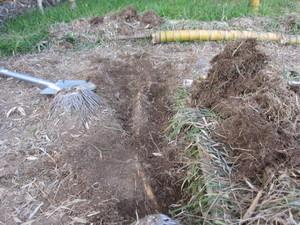 地下茎2013.2.21.jpg