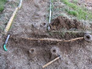 地下茎引っ張り出し2013.2.21.jpg
