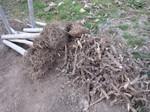 掘り出した地下茎2012.3.20.jpg