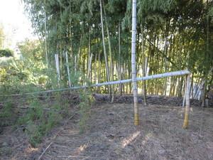 竹2013.9.17.jpg