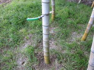 竹切りかけ2013.2.11.jpg