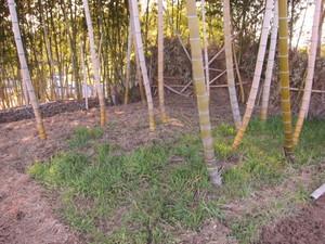 竹林2013.3.21.jpg