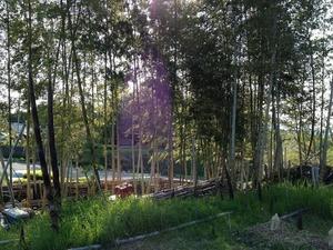 竹林2020.4.28.jpg