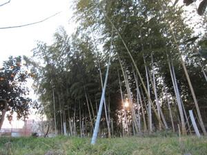 竹棒2013.2.11.jpg