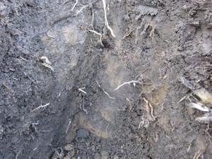 粘土質2012.10.29.jpg
