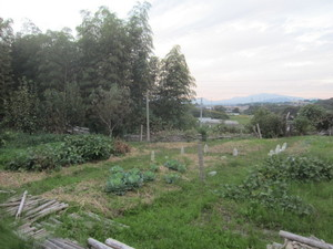 野菜ゾーン2015.10.15.JPG